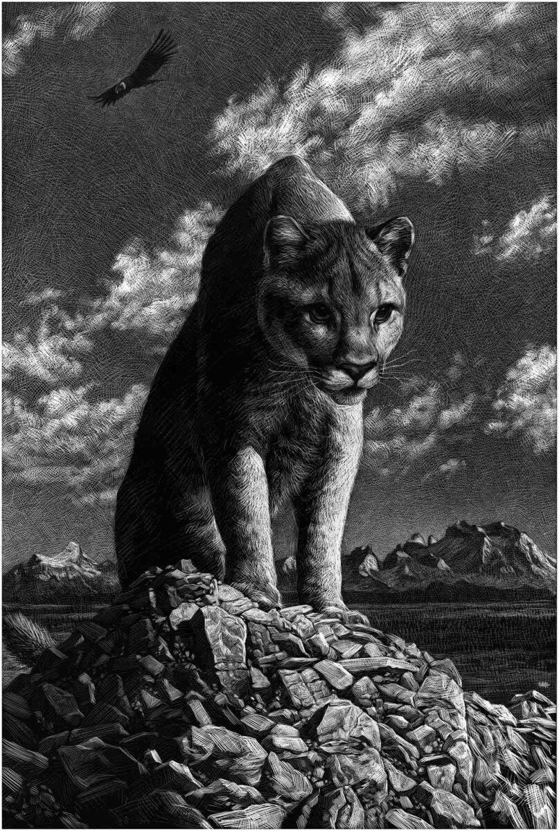 Richard Solomon - A - Puma copia
