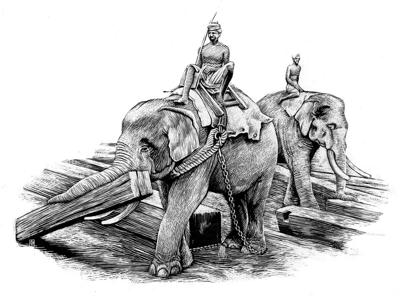 Richard Solomon - Kent-Barton-154-working-elephants004