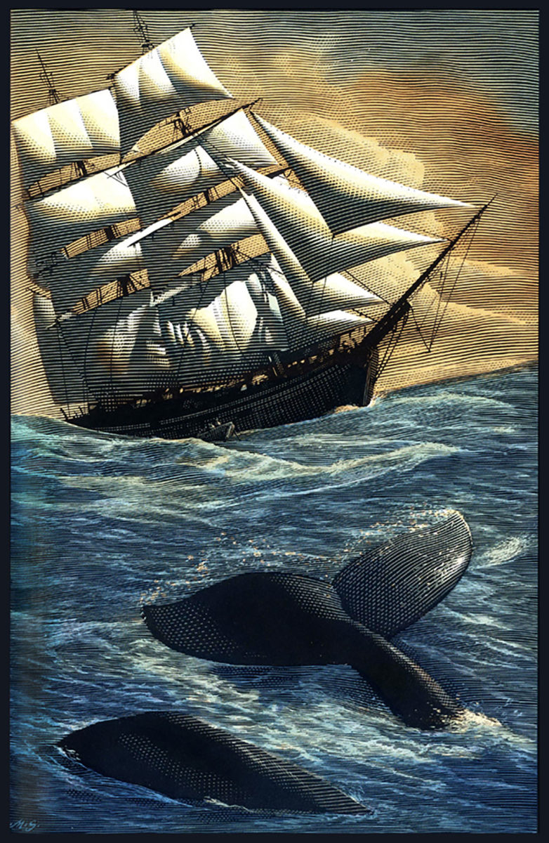 Richard Solomon - Mark-Summers-110-Moby-Dick..color-001