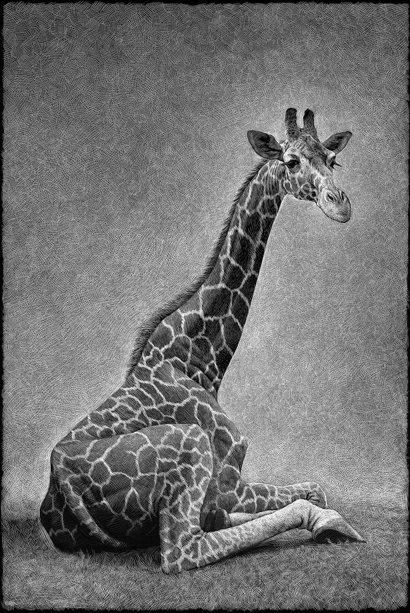 Richard Solomon - Ricardo-Martinez-224-giraffe