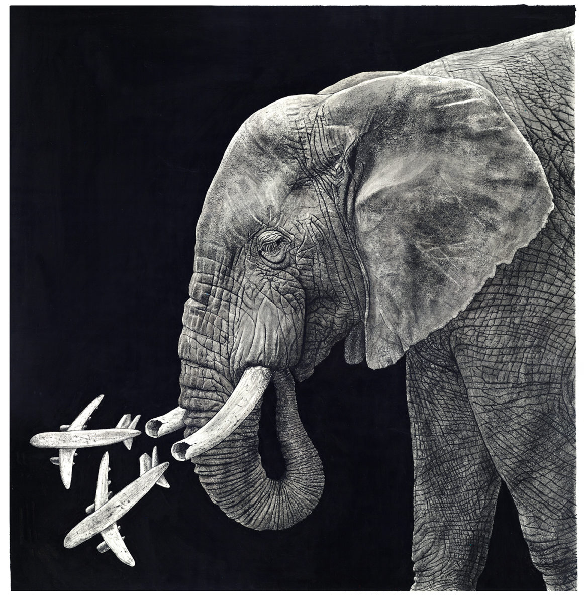 Richard Solomon - elephanthusk1